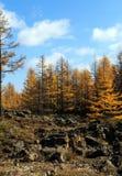 Arxan w Wewnętrznym Mongolia lasu państwowego parku Obraz Stock
