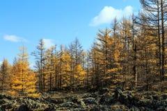 Arxan w Wewnętrznym Mongolia lasu państwowego parku Zdjęcia Royalty Free