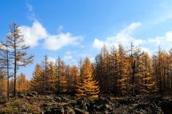 Arxan w Wewnętrznym Mongolia lasu państwowego parku Fotografia Stock