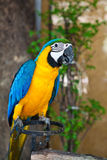 ary błękitny kolor żółty Obrazy Royalty Free