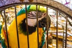 Ary papuga, Grecja zdjęcie stock