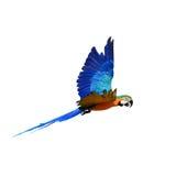 Ary papuga na białym tle Zdjęcie Stock