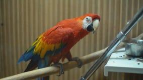 Ary ary papuga zamkni?ta w g?r? zbiory