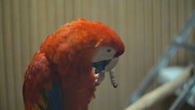 Ary ary papuga zamkni?ta w g?r? zdjęcie wideo