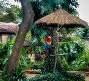 Ary w zielenieją ogród Obraz Royalty Free