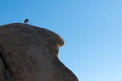 Arywista na granitowym faleza wierzchołku Zdjęcia Stock