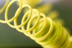 arywisty szczegółu roślina Zdjęcie Royalty Free