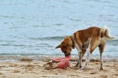 Asätarehund Arkivbilder