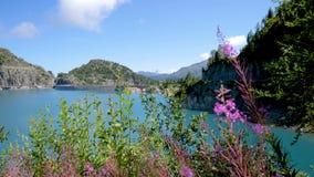 As águas de um lago alpino fluem calmamente nos bancos do lago vídeos de arquivo