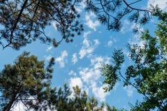 As árvores abaixo veem nuvens do céu azul dos ramos das folhas do quadro imagem de stock