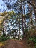 As árvores altas na floresta luxúria imagens de stock