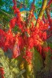As árvores altas são decoradas completamente com fitas vermelhas muitas fitas vermelhas amarradas às árvores Ásia Imagens de Stock