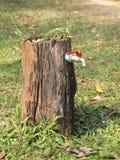 As árvores apoiam nossa vida dão-nos perto alguma água da árvore à válvula do torneira Fotos de Stock