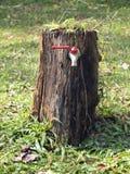 As árvores apoiam nossa vida dão-nos perto alguma água da árvore à válvula do torneira Fotos de Stock Royalty Free