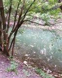As árvores aproximam a água nas férias da primavera na tarde imagens de stock