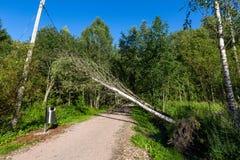 As árvores caídas penduram na linha elétrica após uma tempestade Imagens de Stock Royalty Free