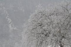 As árvores cobertas com a neve Fotografia de Stock