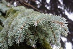 As árvores cobertas com o gelo Fotos de Stock Royalty Free