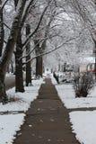 As árvores cobertos de neve pendem sobre o passeio recentemente cancelado fotografia de stock royalty free
