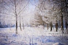 As árvores cobriram com a geada no inverno o parque da cidade Arquitectura da cidade do inverno Imagem de Stock Royalty Free