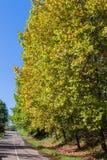 Quadro do vertical da estrada das estações das árvores Imagem de Stock