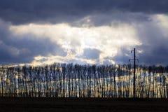 As árvores com folhas caídas estão em uma linha reta contra os vagabundos fotos de stock