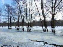 As árvores com gelo remendam após a inundação, Lituânia imagem de stock royalty free