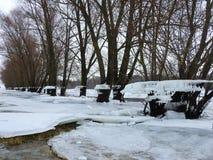 As árvores com gelo remendam após a inundação, Lituânia fotografia de stock royalty free