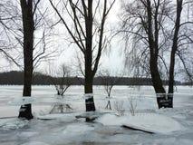 As árvores com gelo remendam após a inundação, Lituânia fotos de stock royalty free