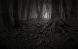 As árvores com raizes gigantes na obscuridade assombraram a floresta Fotos de Stock Royalty Free