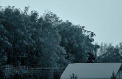As árvores congeladas após o blizzard que está na floresta gostam em uma cauda feericamente escura fotos de stock