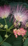 As árvores crescem e as flores ou as folhas saem Foto de Stock