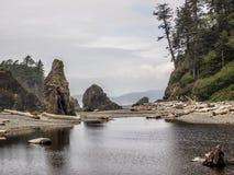 As árvores crescem em pilhas do mar no Sandy Beach Fotos de Stock Royalty Free