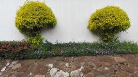As árvores da flor jorram trmmed Imagem de Stock