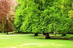 As árvores da mola são verdes no parque foto de stock