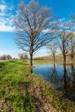 As árvores da paisagem da mola são inundadas Imagem de Stock Royalty Free