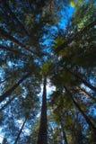 As árvores da paisagem a mais forestforest Imagens de Stock Royalty Free