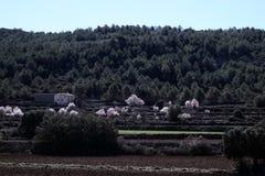As árvores de amêndoa florescem na paisagem cênico terraced em Alicante, S Fotos de Stock
