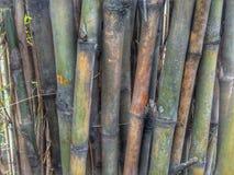 As árvores de bambu imagem de stock