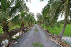 As árvores de coco ao longo da estrada conduzem à vila do campo Imagem de Stock Royalty Free