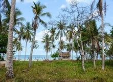 As árvores de coco com a praia em Phan soaram, Vietname Fotografia de Stock