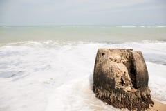 As árvores de coco têm sido cortadas há muito tempo na praia, ondas na praia, as ondas são nebulosas, o sol estão brilhando Fotografia de Stock