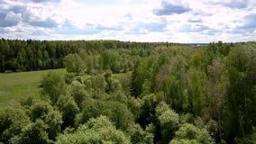 As árvores de floresta alta pictóricos cercam a parte superior verde do prado filme