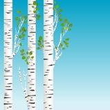 As árvores de vidoeiro com verde saem do fundo ilustração do vetor