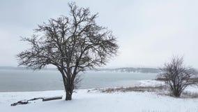 As árvores desencapadas no lago suportam no dia de inverno nebuloso filme