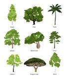 As árvores diferentes vector a coleção e as palmas exóticas isoladas no branco ilustração do vetor