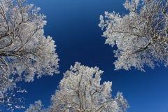 As árvores do inverno com neve e o céu azul profundo Fotografia de Stock Royalty Free