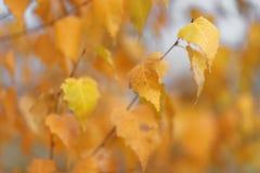 As árvores do outono com amarelar saem contra o céu Imagens de Stock