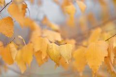 As árvores do outono com amarelar saem contra o céu Fotos de Stock Royalty Free