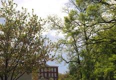 As árvores dominam o céu da tempestade da fabricação de cerveja com construção no fundo imagem de stock